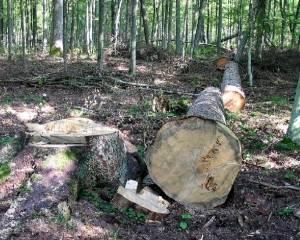 Часть территории Беличанская леса отдали под застройку